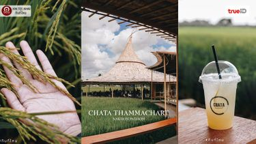 คาเฟ่กลางทุ่งนา นครปฐม Chata Thammachart สัมผัสรวงข้าวกันอย่างใกล้ชิด