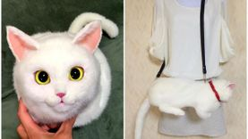 เหมือนเว่อร์! กระเป๋าน้องแมวสุดมุ้งมิ้ง ที่เหมือนจริงจนทาสแมวต้องกรีดร้องขอซักใบ