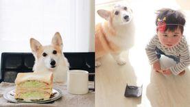 หมั่นเขี้ยวมาก! อัลบั้มรูปภาพน่ารักน่าหยิกฉบับคู่ซี้คนกับหมา