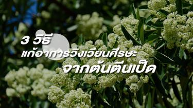 3 วิธีแก้อาการวิงเวียนศีรษะ จากต้นตีนเป็ด กลิ่นดอกไม้เจ้าปัญหาในหน้าหนาว