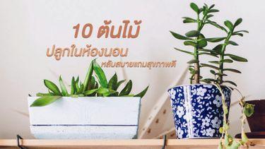 10 ต้นไม้ ปลูกได้ในห้องนอน หลับสบายแถมสุขภาพดี ไม่ง้อเครื่องฟอกอากาศ