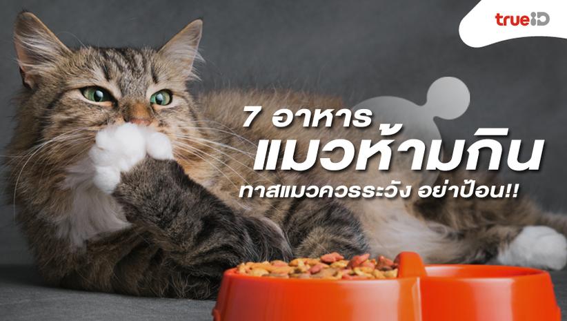 7 อาหารที่แมวห้ามกิน ทาสแมวควรระวัง อย่าป้อน!!