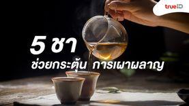 5 ชา ดื่มแล้วดี! ช่วยกระตุ้นการเผาผลาญ ลดไขมันดี เหมาะสำหรับคนลดน้ำหนัก!